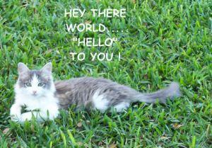 ♥ World Hello! Day♥