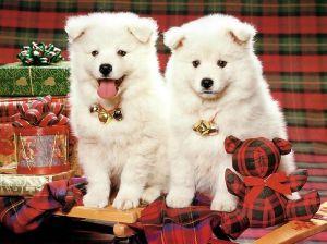 ♥ Merry Xmas 1 ~