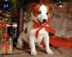♥ Merry Xmas ~ 8