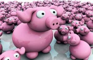 Lots of Pigs!