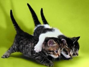 curious kittens♥