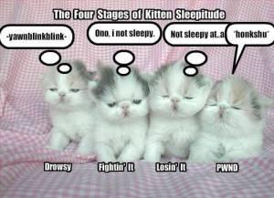meow~yawn....