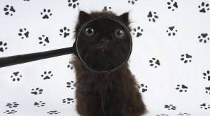 ♥Inspector Catdget